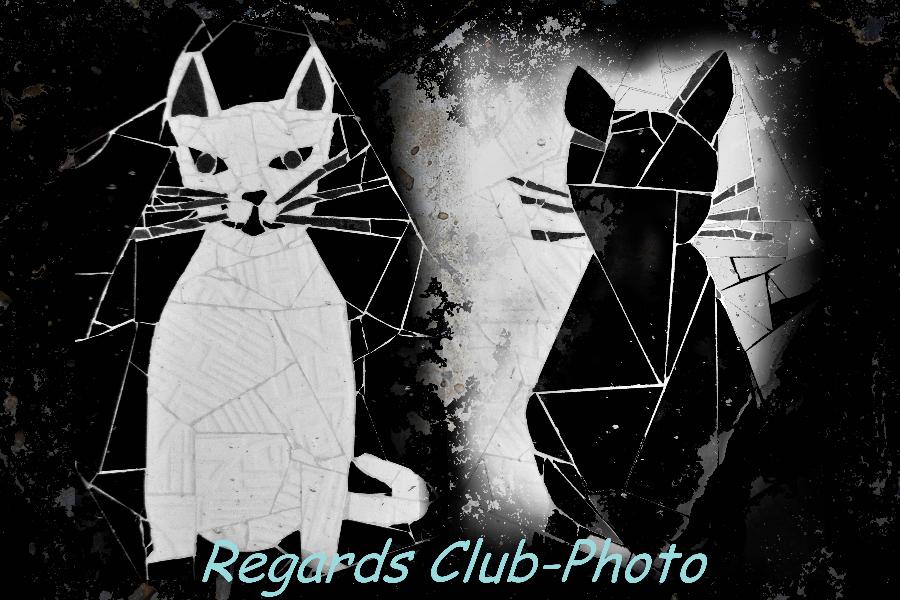chat-noir-blanc