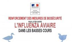 grippe aviaire-mesures-de-biosecuri