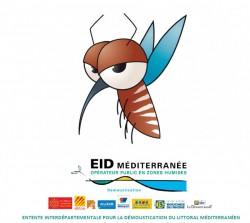 moustique-eid
